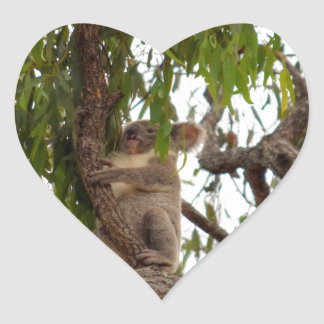 KOALA IN TREE QUEENSLAND AUSTRALIA HEART STICKER