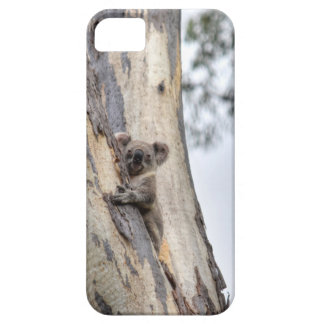 KOALA IN TREE QUEENSLAND AUSTRALIA iPhone 5 COVER