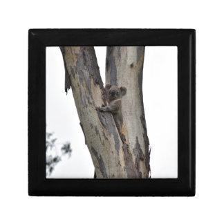 KOALA IN TREE QUEENSLAND AUSTRALIA JEWELRY BOXES