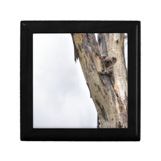 KOALA IN TREE QUEENSLAND AUSTRALIA KEEPSAKE BOXES