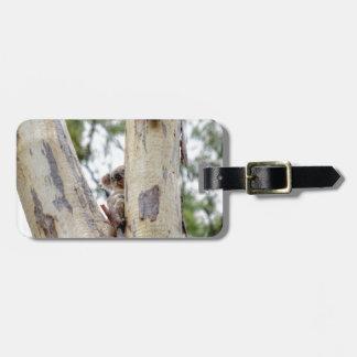 KOALA IN TREE QUEENSLAND AUSTRALIA LUGGAGE TAG