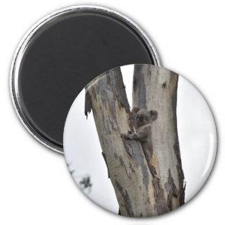 KOALA IN TREE QUEENSLAND AUSTRALIA MAGNET