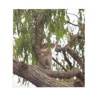 KOALA IN TREE QUEENSLAND AUSTRALIA NOTEPAD