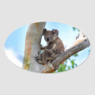 KOALA IN TREE QUEENSLAND AUSTRALIA OVAL STICKER