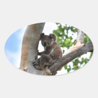 KOALA IN TREE QUEENSLAND AUSTRALIA OVAL STICKER