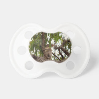 KOALA IN TREE QUEENSLAND AUSTRALIA PACIFIER