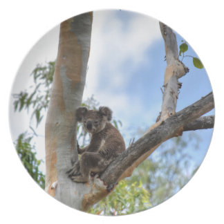 KOALA IN TREE QUEENSLAND AUSTRALIA PARTY PLATES
