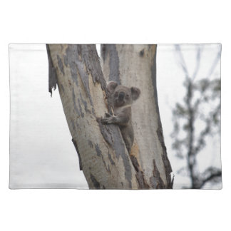 KOALA IN TREE QUEENSLAND AUSTRALIA PLACEMAT