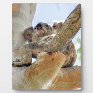 KOALA IN TREE QUEENSLAND AUSTRALIA PLAQUE