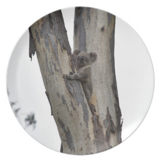 KOALA IN TREE QUEENSLAND AUSTRALIA PLATE
