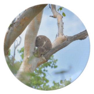 KOALA IN TREE QUEENSLAND AUSTRALIA PLATES