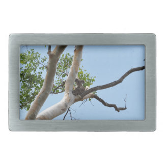 KOALA IN TREE QUEENSLAND AUSTRALIA RECTANGULAR BELT BUCKLE
