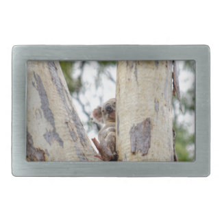 KOALA IN TREE QUEENSLAND AUSTRALIA RECTANGULAR BELT BUCKLES