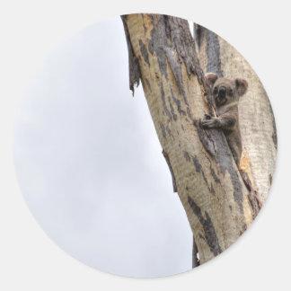 KOALA IN TREE QUEENSLAND AUSTRALIA ROUND STICKER