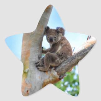 KOALA IN TREE QUEENSLAND AUSTRALIA STAR STICKER