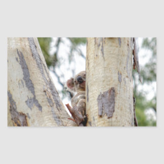KOALA IN TREE QUEENSLAND AUSTRALIA STICKER