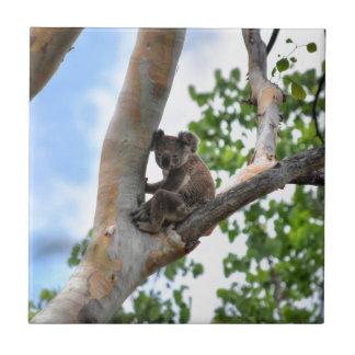 KOALA IN TREE QUEENSLAND AUSTRALIA TILE