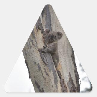 KOALA IN TREE QUEENSLAND AUSTRALIA TRIANGLE STICKER