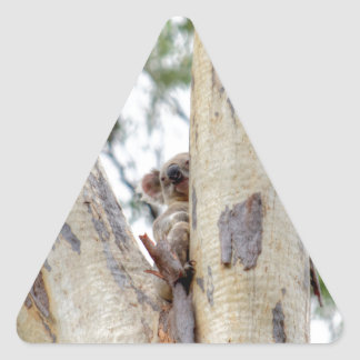 KOALA IN TREE QUEENSLAND AUSTRALIA TRIANGLE STICKER