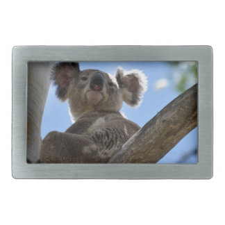 KOALA IN TREE RURAL QUEENSLAND AUSTRALIA BELT BUCKLE