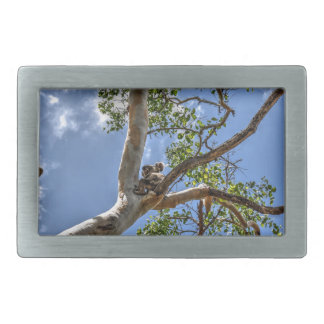 KOALA IN TREE RURAL QUEENSLAND AUSTRALIA BELT BUCKLES