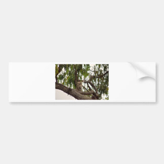 KOALA IN TREE RURAL QUEENSLAND AUSTRALIA BUMPER STICKER