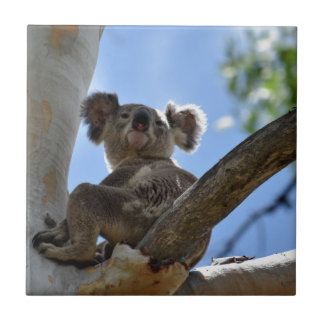 KOALA IN TREE RURAL QUEENSLAND AUSTRALIA CERAMIC TILES