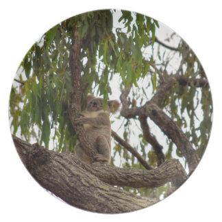 KOALA IN TREE RURAL QUEENSLAND AUSTRALIA DINNER PLATES
