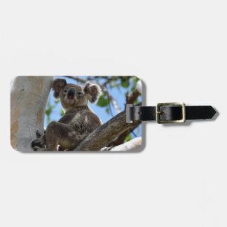 KOALA IN TREE RURAL QUEENSLAND AUSTRALIA LUGGAGE TAG
