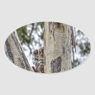 KOALA IN TREE RURAL QUEENSLAND AUSTRALIA OVAL STICKER