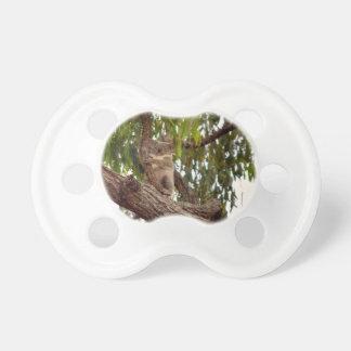 KOALA IN TREE RURAL QUEENSLAND AUSTRALIA PACIFIER