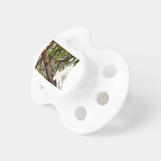 KOALA IN TREE RURAL QUEENSLAND AUSTRALIA PACIFIER