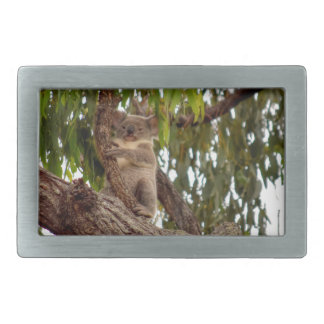 KOALA IN TREE RURAL QUEENSLAND AUSTRALIA RECTANGULAR BELT BUCKLE