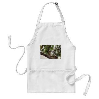 KOALA IN TREE RURAL QUEENSLAND AUSTRALIA STANDARD APRON
