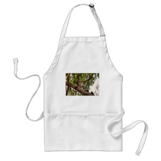 KOALA IN TREE RURAL QUEENSLAND AUSTRALIA STANDARD APRON