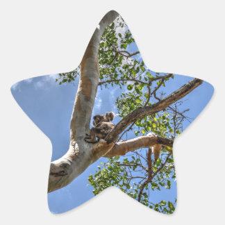 KOALA IN TREE RURAL QUEENSLAND AUSTRALIA STAR STICKER