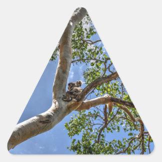 KOALA IN TREE RURAL QUEENSLAND AUSTRALIA TRIANGLE STICKER