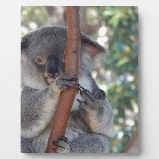 Koala.JPG Plaque