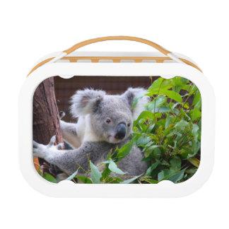 Koala Lunch Box