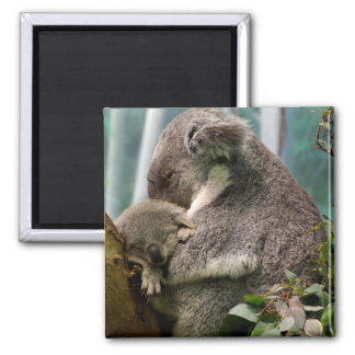 Koala Mom and New Baby Magnet