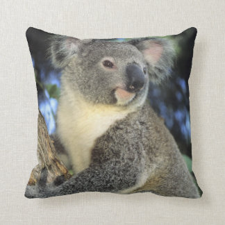 Koala, Phascolarctos cinereus), Australia, Throw Pillow