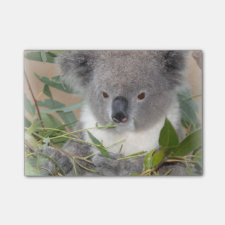 Koala Post-it Notes