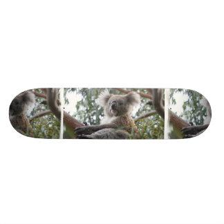 Koala Skateboard