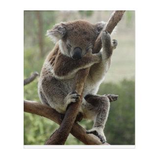 Koala Wall Art