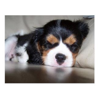 Koda Cavalier Spaniel Pup Postcard
