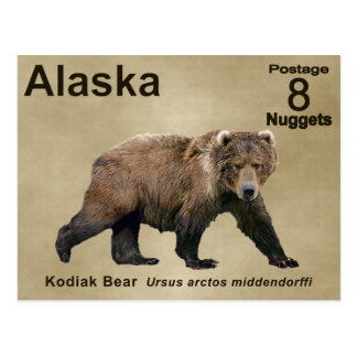 Kodiak Bear Postcard