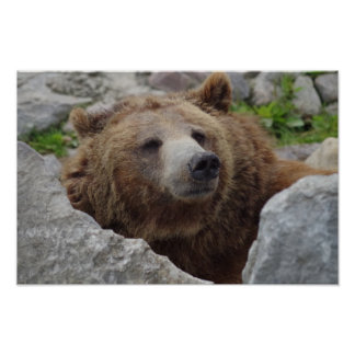 Kodiak Bear Poster