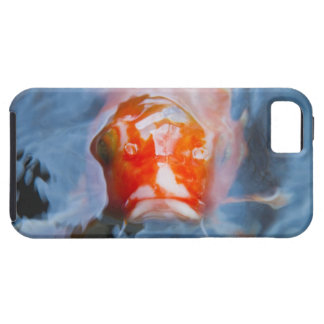 Koi Carp (Cyprinus carpio), Japan Case For The iPhone 5