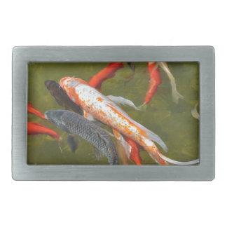 Koi carps in pond belt buckle