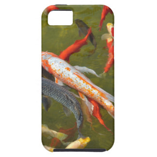 Koi carps in pond iPhone 5 cover